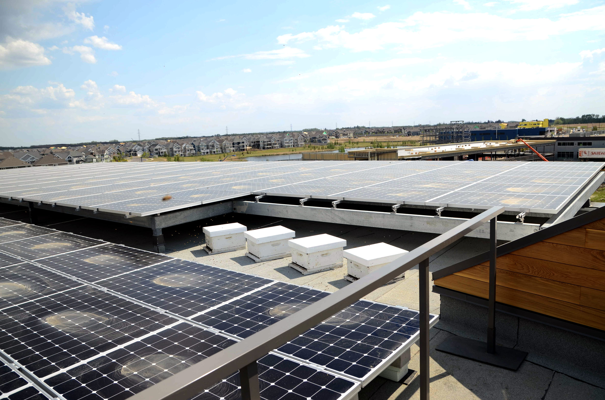 Beehives on the rooftop of the Mosaic Centre amongst the solar panel array